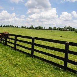 Krystal Cancun Timeshare Reviews the Offerings of Lexington, Kentucky